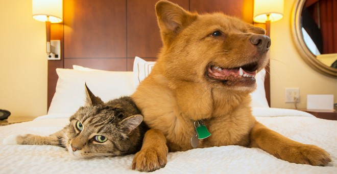 Pet Friendly Hotels In Edinburgh Britannia Hotels